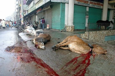 halal slaughter in pakistan
