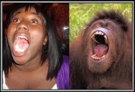 chimpout