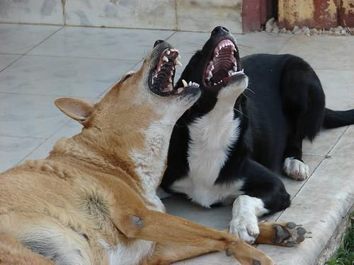 dogs-laughing-2